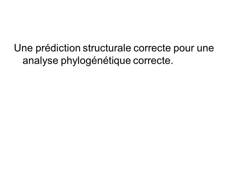 Une prédiction structurale correcte pour une analyse phylogénétique correcte.
