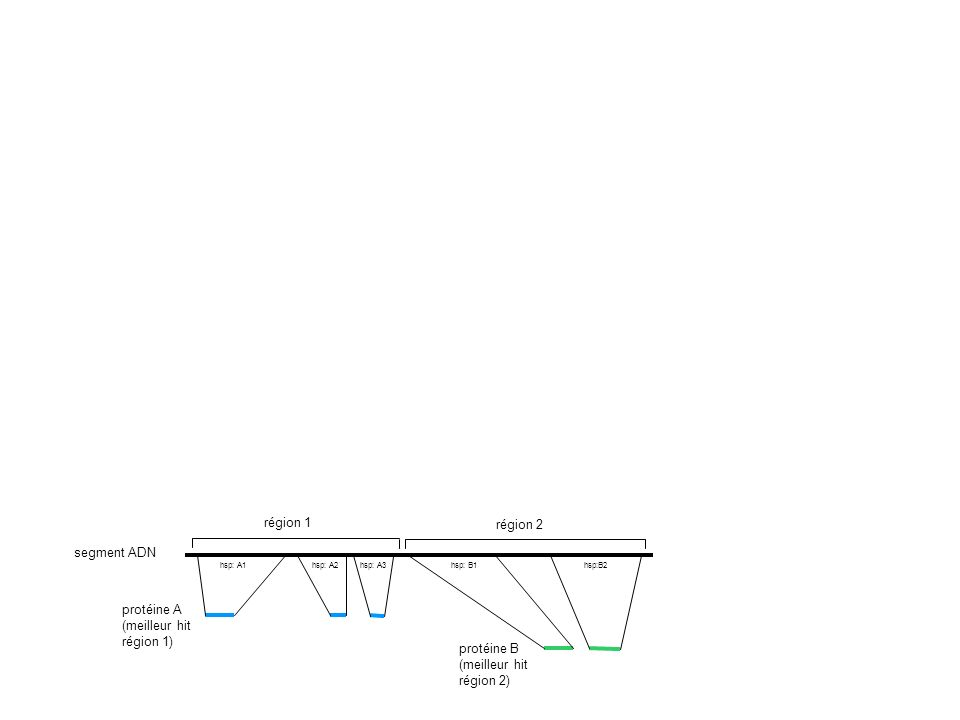segment ADN protéine A (meilleur hit région 1) protéine B (meilleur hit région 2) région 1 région 2 hsp: A1hsp: A2hsp: A3 hsp: B1hsp:B2