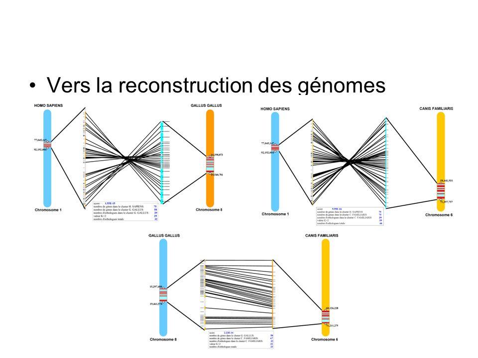 Vers la reconstruction des génomes ancestraux