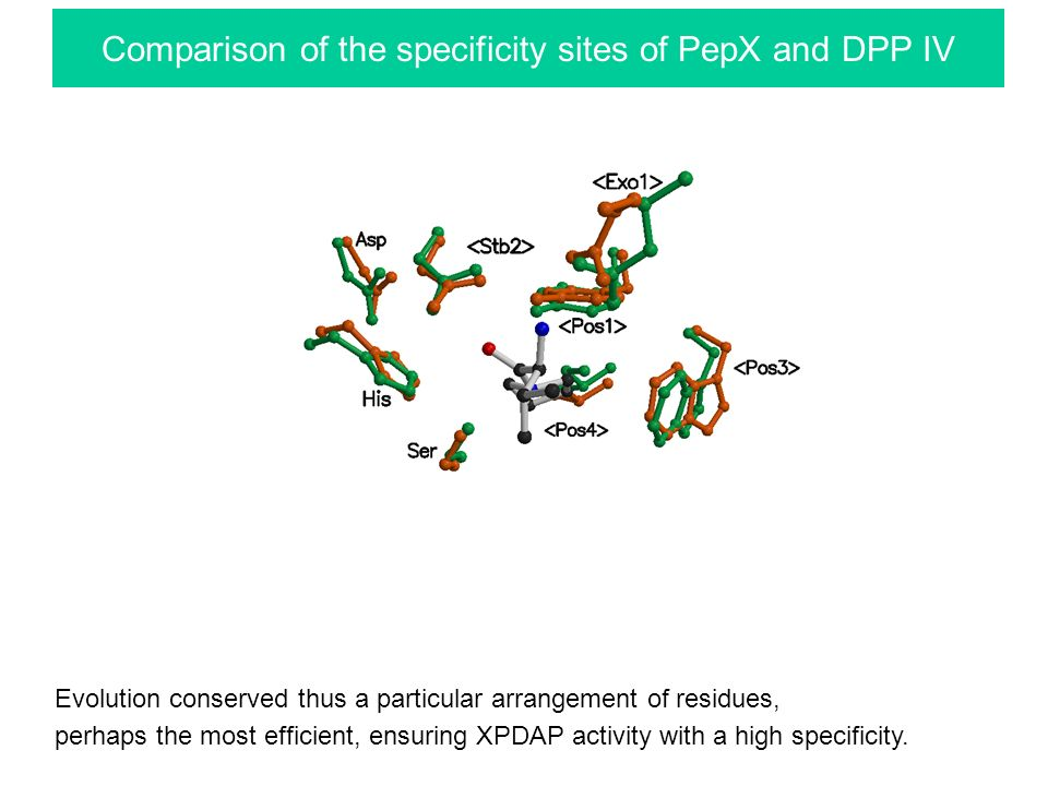 Comparison of the specificity sites of PepX and DPP IV Evolution conserved thus a particular arrangement of residues, perhaps the most efficient, ensuring XPDAP activity with a high specificity.