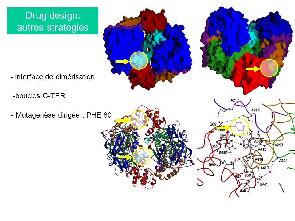 Drug design: autres stratégies -boucles C-TER - interface de dimérisation - Mutagenèse dirigée : PHE 80