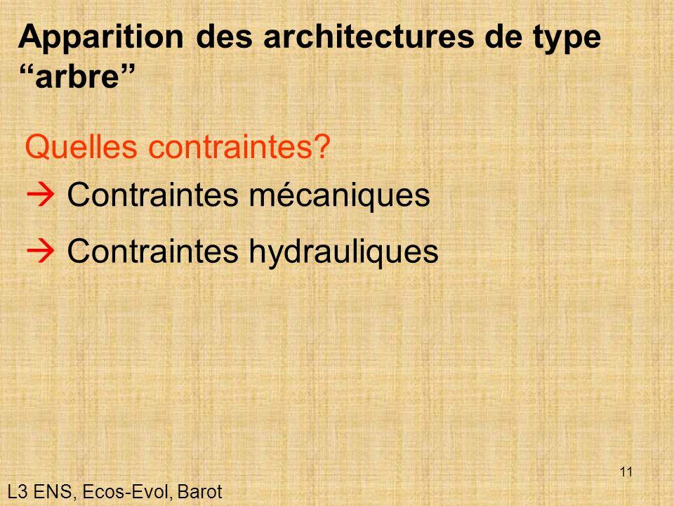 11 Apparition des architectures de type arbre Contraintes mécaniques Quelles contraintes? Contraintes hydrauliques L3 ENS, Ecos-Evol, Barot