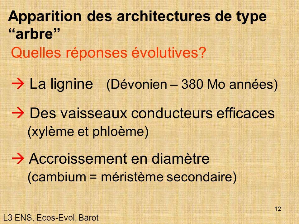 12 Apparition des architectures de type arbre La lignine (Dévonien – 380 Mo années) Quelles réponses évolutives? Des vaisseaux conducteurs efficaces (