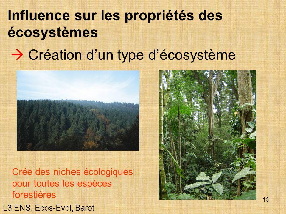 13 Influence sur les propriétés des écosystèmes Création dun type décosystème Crée des niches écologiques pour toutes les espèces forestières L3 ENS,