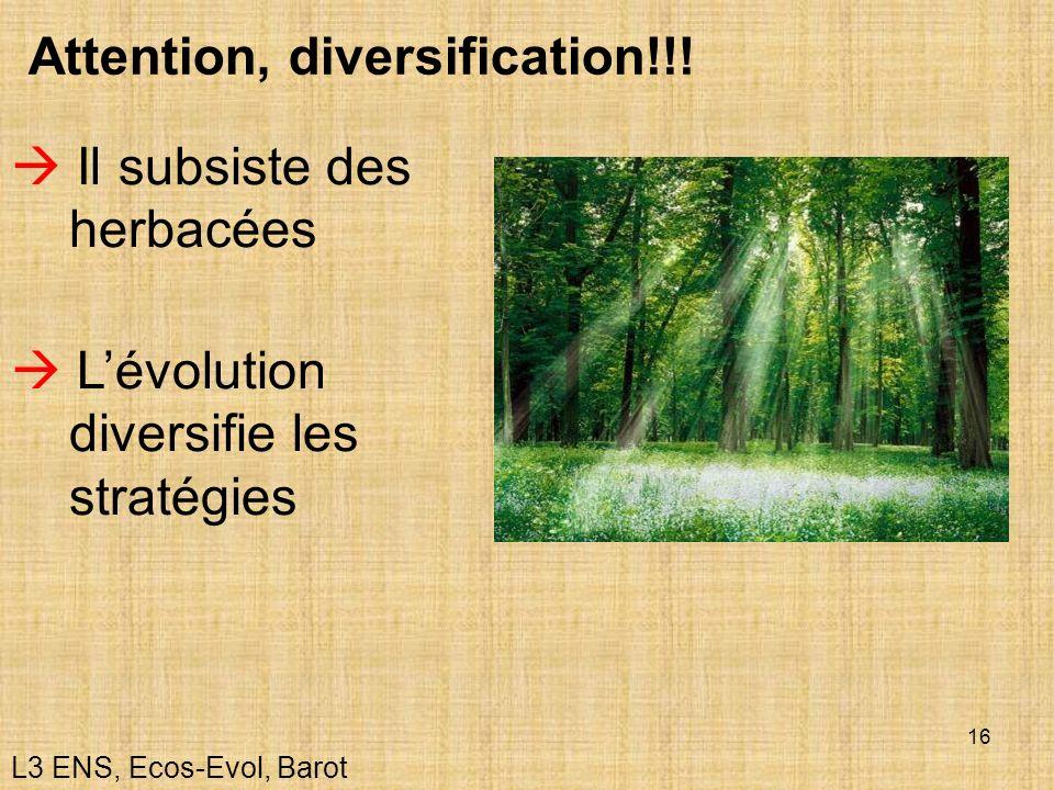 16 Attention, diversification!!! Il subsiste des herbacées Lévolution diversifie les stratégies L3 ENS, Ecos-Evol, Barot