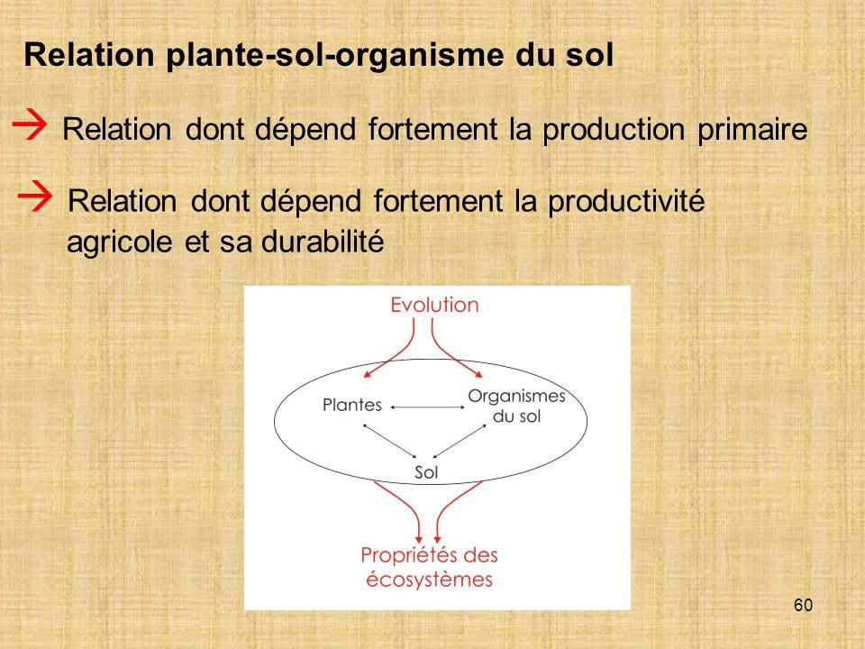 60 Relation plante-sol-organisme du sol Relation dont dépend fortement la production primaire Relation dont dépend fortement la productivité agricole