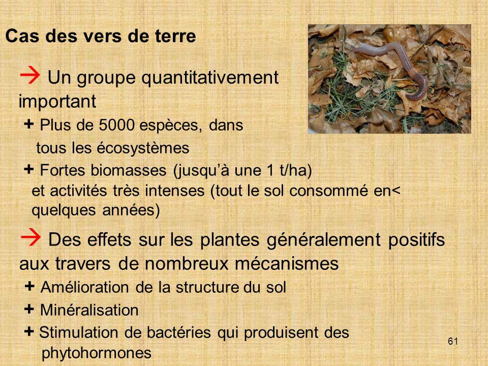 61 Cas des vers de terre Un groupe quantitativement important + Plus de 5000 espèces, dans tous les écosystèmes + Fortes biomasses (jusquà une 1 t/ha)