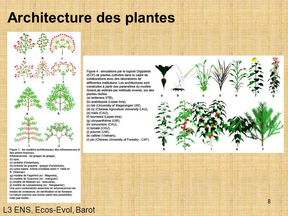 8 Architecture des plantes L3 ENS, Ecos-Evol, Barot