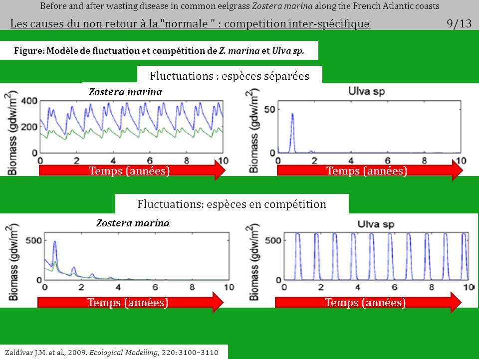 Zaldívar J.M. et al., 2009. Ecological Modelling, 220: 3100–3110 Figure: Modèle de fluctuation et compétition de Z. marina et Ulva sp. Temps (années)