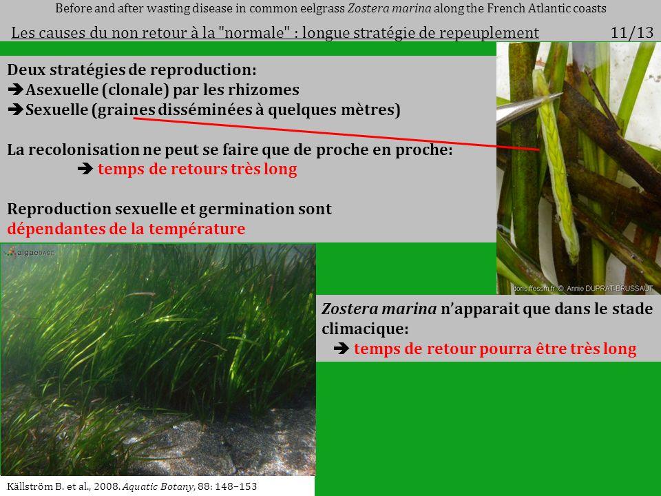 Deux stratégies de reproduction: Asexuelle (clonale) par les rhizomes Sexuelle (graines disséminées à quelques mètres) La recolonisation ne peut se fa
