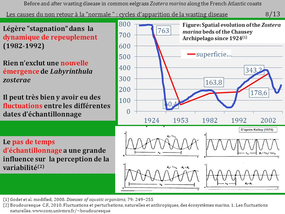 Légère stagnation dans la dynamique de repeuplement (1982-1992) Rien nexclut une nouvelle émergence de Labyrinthula zosterae Il peut très bien y avoir eu des fluctuations entre les différentes dates déchantillonnage Le pas de temps déchantillonnage a une grande influence sur la perception de la variabilité (2) Before and after wasting disease in common eelgrass Zostera marina along the French Atlantic coasts Les causes du non retour à la normale : cycles dapparition de la wasting disease 8 /13 Figure: Spatial evolution of the Zostera marina beds of the Chausey Archipelago since 1924 (1) (1)Godet et al.