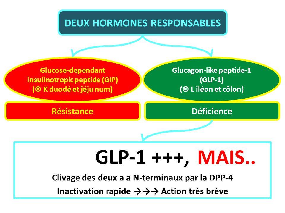 DEUX HORMONES RESPONSABLES Glucose-dependant insulinotropic peptide (GIP) (© K duodé et jéju num) Glucagon-like peptide-1 (GLP-1) (© L iléon et côlon)