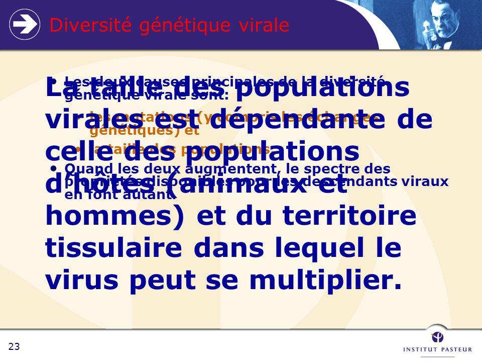 23 Diversité génétique virale Les deux causes principales de la diversité génétique virale sont: les mutations (y compris les échanges génétiques) et la taille des populations.