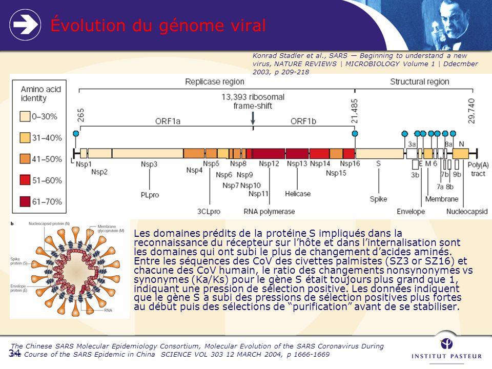 34 Évolution du génome viral Les domaines prédits de la protéine S impliqués dans la reconnaissance du récepteur sur lhôte et dans linternalisation sont les domaines qui ont subi le plus de changement dacides aminés.