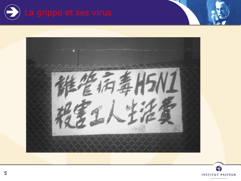 5 La grippe et ses virus