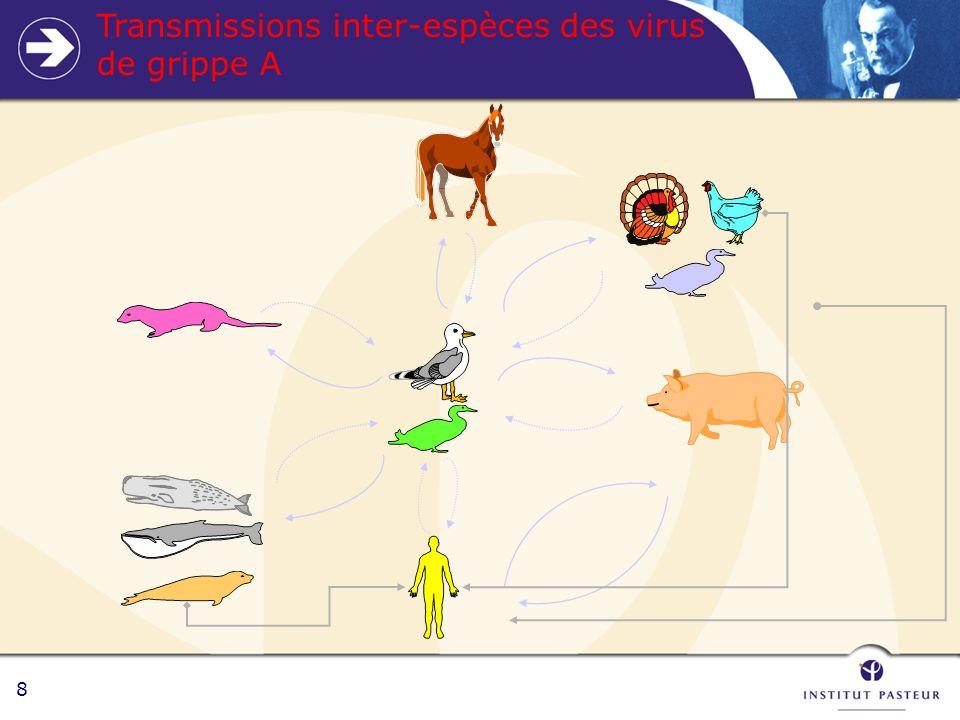 8 Transmissions inter-espèces des virus de grippe A