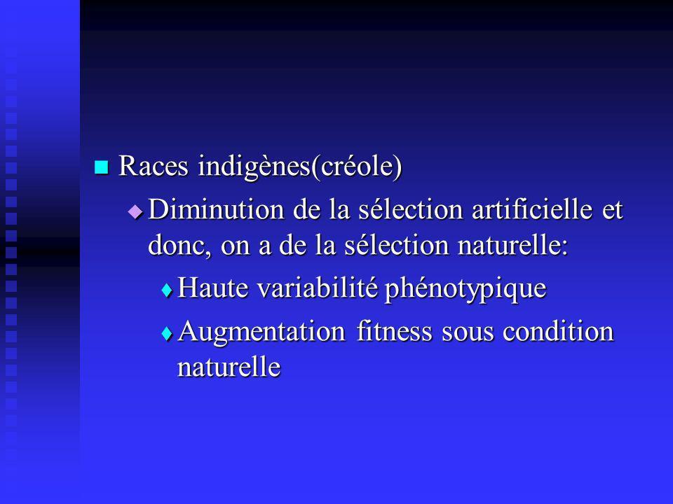 Races indigènes(créole) Races indigènes(créole) Diminution de la sélection artificielle et donc, on a de la sélection naturelle: Diminution de la séle