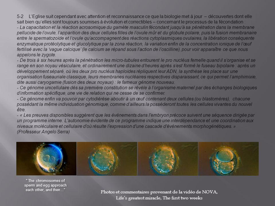 5-2 LEglise suit cependant avec attention et reconnaissance ce que la biologie met à jour – découvertes dont elle sait bien quelles sont toujours soumises à évolution et correctibles – concernant le processus de la fécondation : - La capacitation et la réaction acrosomique du gamète masculin fécondant jusquà sa pénétration dans la membrane pellucide de lovule, lapparition des deux cellules filles de lovule mûr et du globule polaire, puis la fusion membranaire entre le spermatozoïde et lovule quaccompagnent des réactions cytoplasmiques ovulaires, la libération conséquente enzymatique protéolytique et glucolytique par la zona réaction, la variation enfin de la concentration ionique de lœuf fertilisé avec la vague calcique (le calcium se répand sous laction de loscilline), pour voir apparaître ce que nous appelons le zygote.