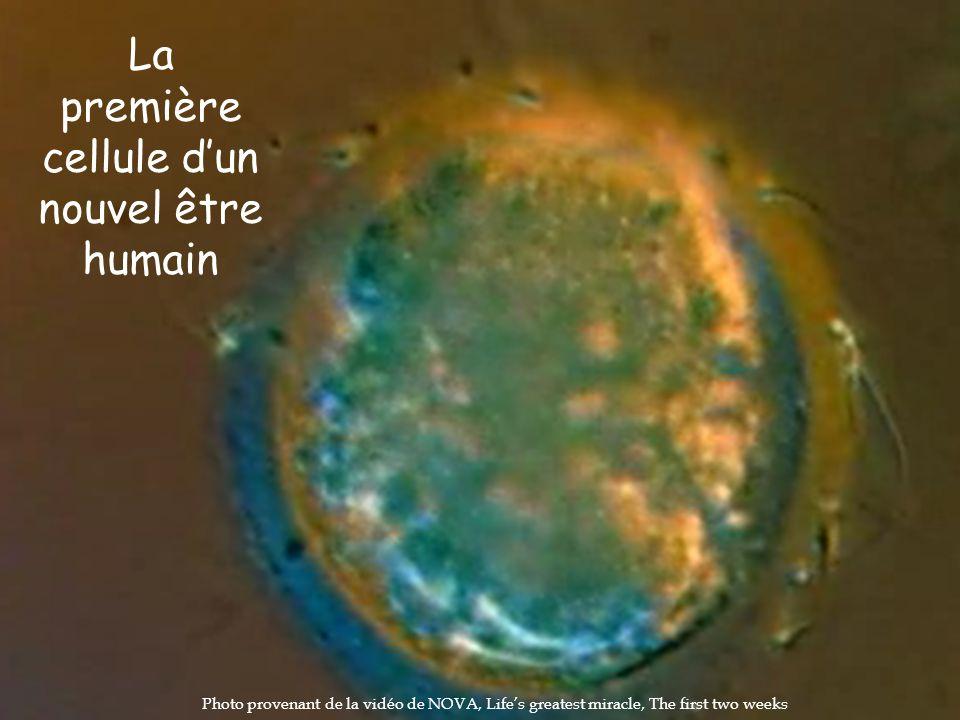 La première cellule dun nouvel être humain Photo provenant de la vidéo de NOVA, Lifes greatest miracle, The first two weeks