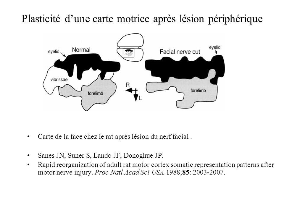 Plasticité dune carte motrice après lésion périphérique Carte de la face chez le rat après lésion du nerf facial. Sanes JN, Suner S, Lando JF, Donoghu