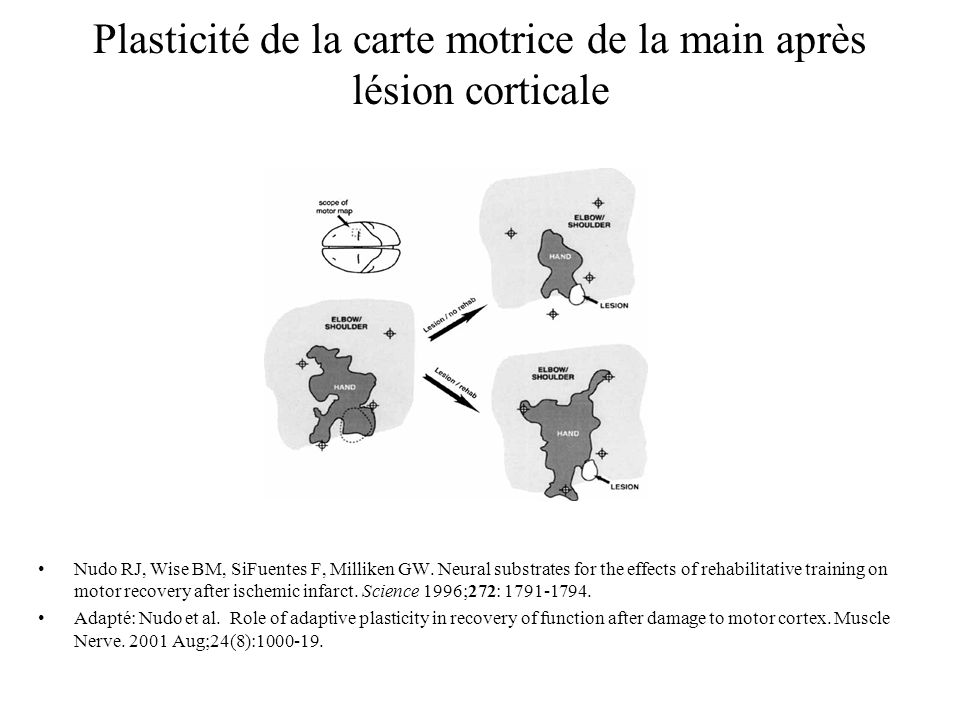 Plasticité de la carte motrice de la main après lésion corticale Nudo RJ, Wise BM, SiFuentes F, Milliken GW. Neural substrates for the effects of reha
