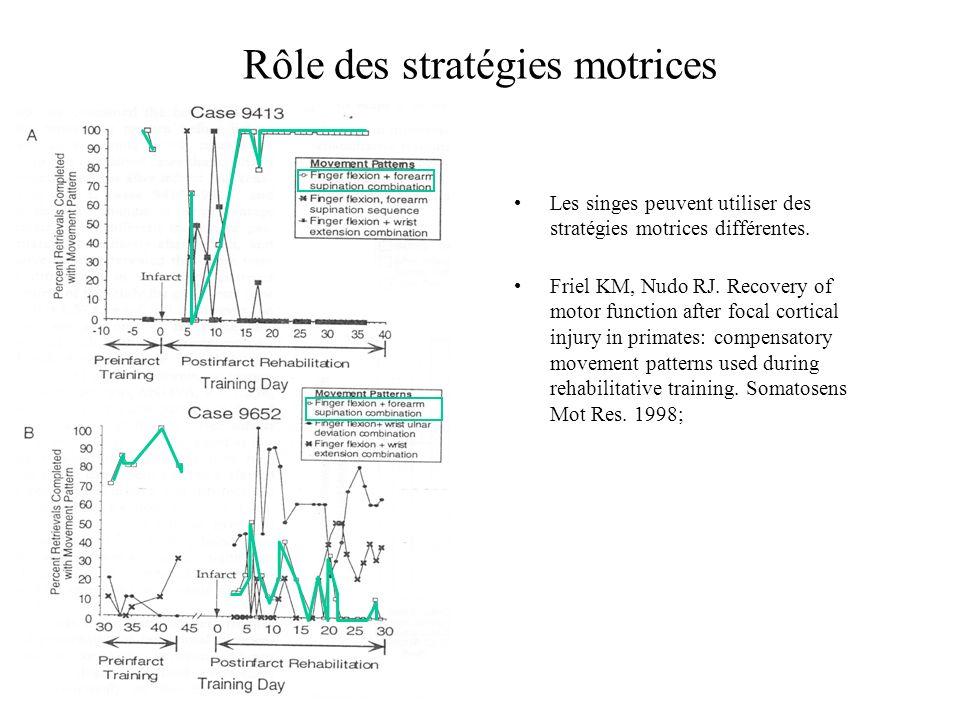 Rôle des stratégies motrices Les singes peuvent utiliser des stratégies motrices différentes. Friel KM, Nudo RJ. Recovery of motor function after foca