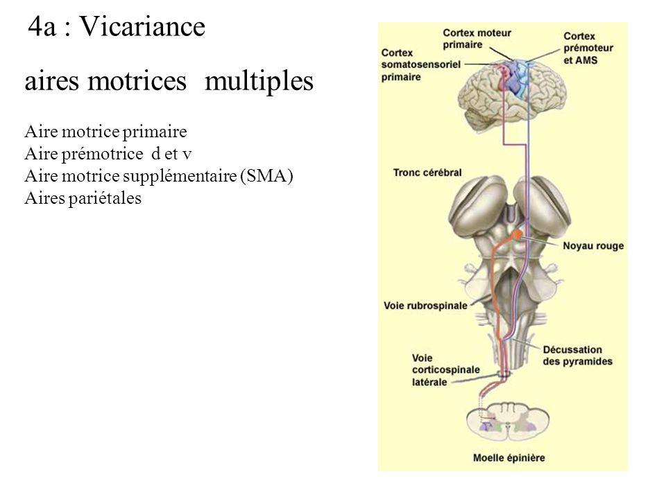 4a : Vicariance aires motrices multiples Aire motrice primaire Aire prémotrice d et v Aire motrice supplémentaire (SMA) Aires pariétales