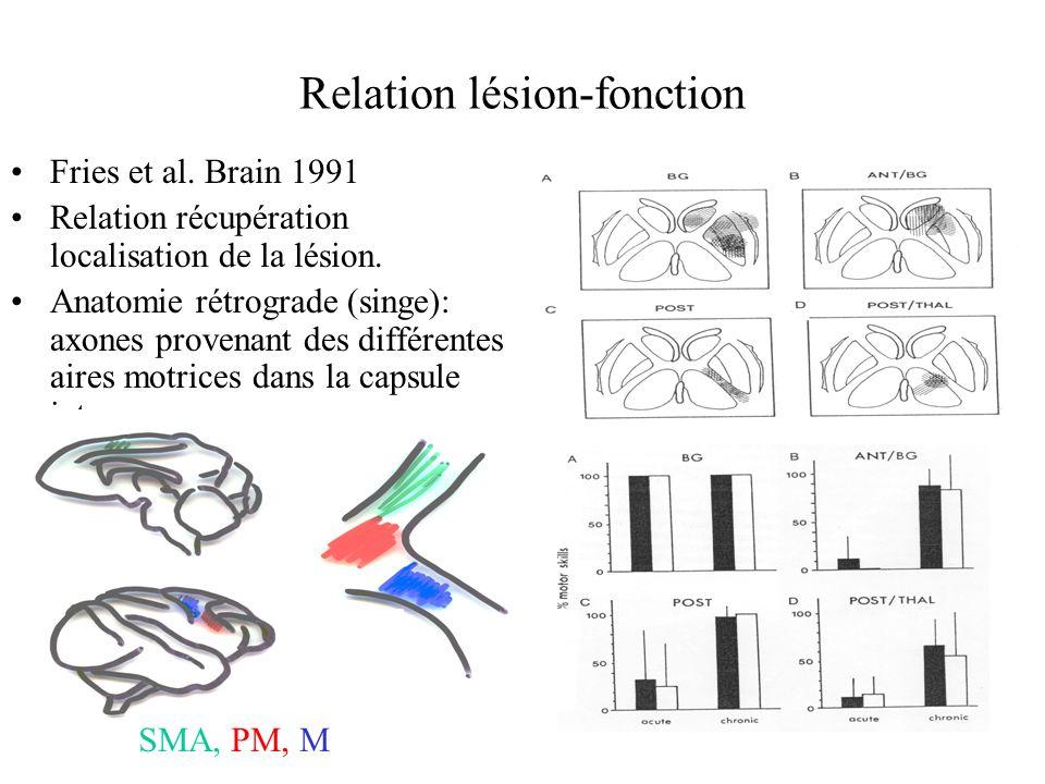 Relation lésion-fonction Fries et al. Brain 1991 Relation récupération localisation de la lésion. Anatomie rétrograde (singe): axones provenant des di