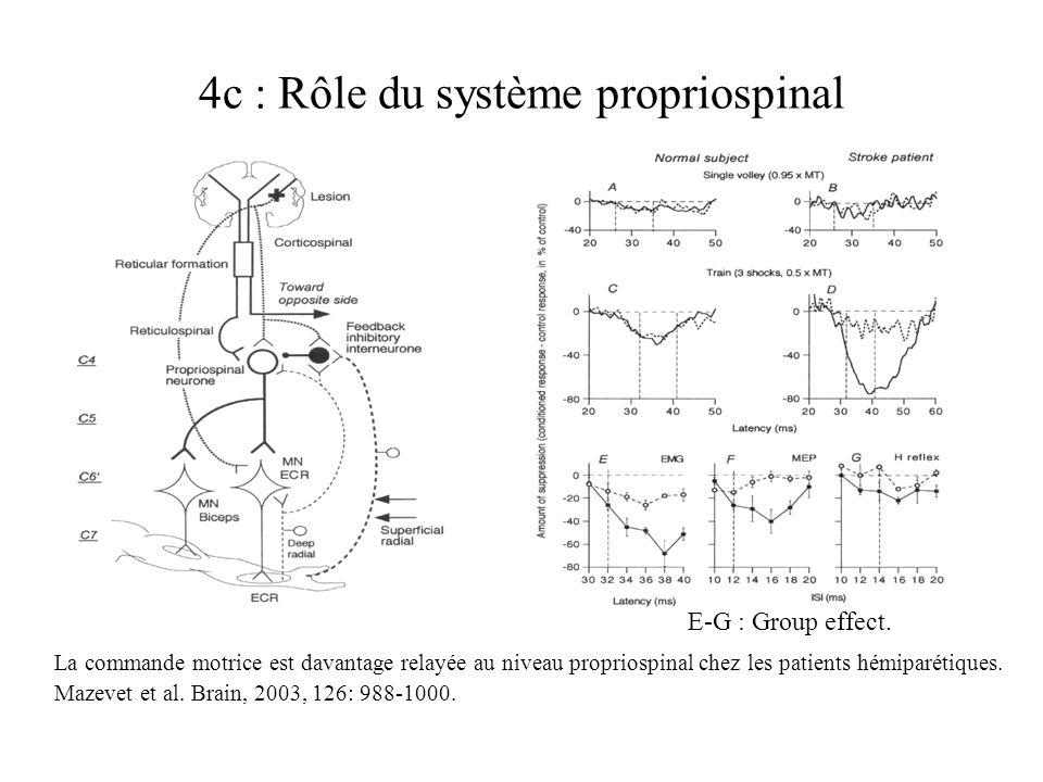 4c : Rôle du système propriospinal La commande motrice est davantage relayée au niveau propriospinal chez les patients hémiparétiques. Mazevet et al.