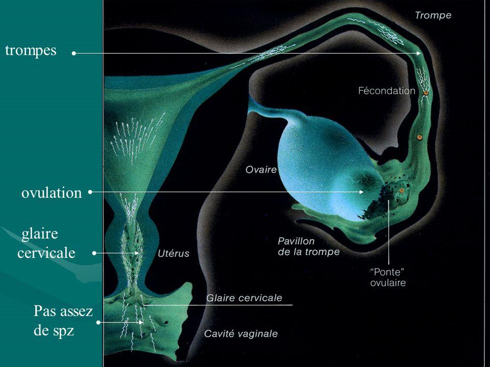 Pas assez de spz glaire cervicale ovulation trompes