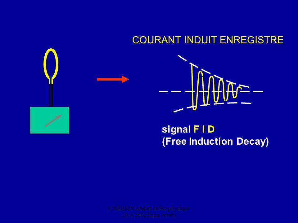 CNEBMN Atelier de Biophysique 29/3/2002 Ilana Peretti signal F I D (Free Induction Decay) COURANT INDUIT ENREGISTRE