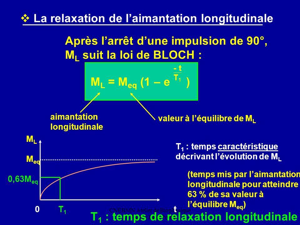 CNEBMN Atelier de Biophysique 29/3/2002 Ilana Peretti La relaxation de laimantation longitudinale Après larrêt dune impulsion de 90°, M L suit la loi