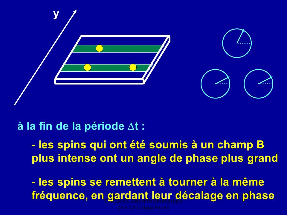 CNEBMN Atelier de Biophysique 29/3/2002 Ilana Peretti - les spins qui ont été soumis à un champ B plus intense ont un angle de phase plus grand y - le
