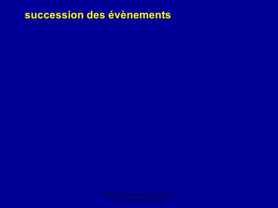 CNEBMN Atelier de Biophysique 29/3/2002 Ilana Peretti succession des évènements
