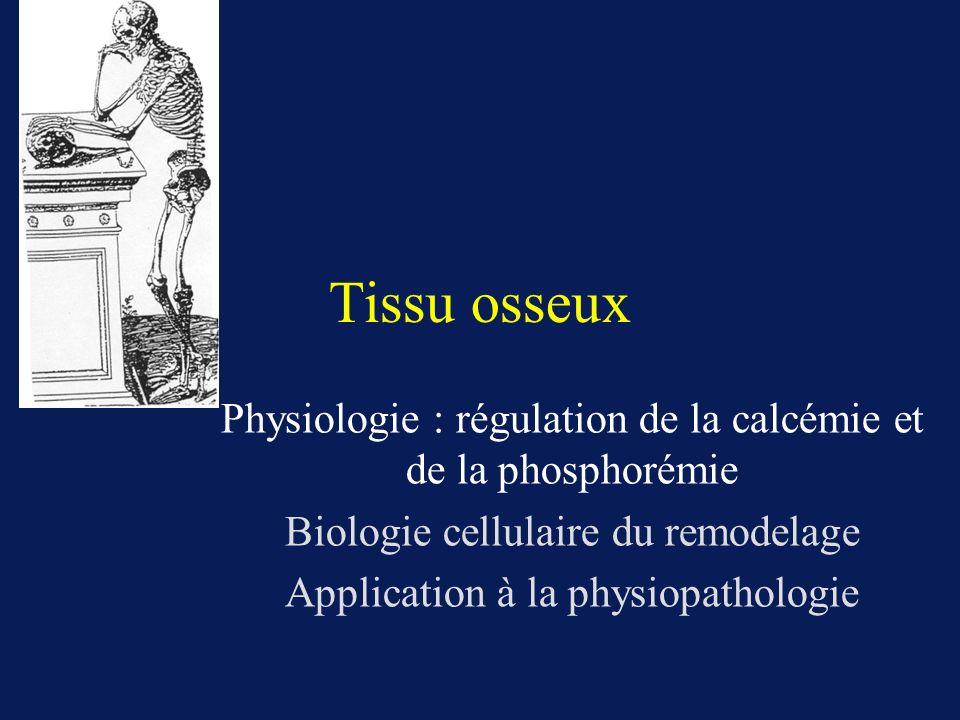Tissu osseux Physiologie : régulation de la calcémie et de la phosphorémie Biologie cellulaire du remodelage Application à la physiopathologie