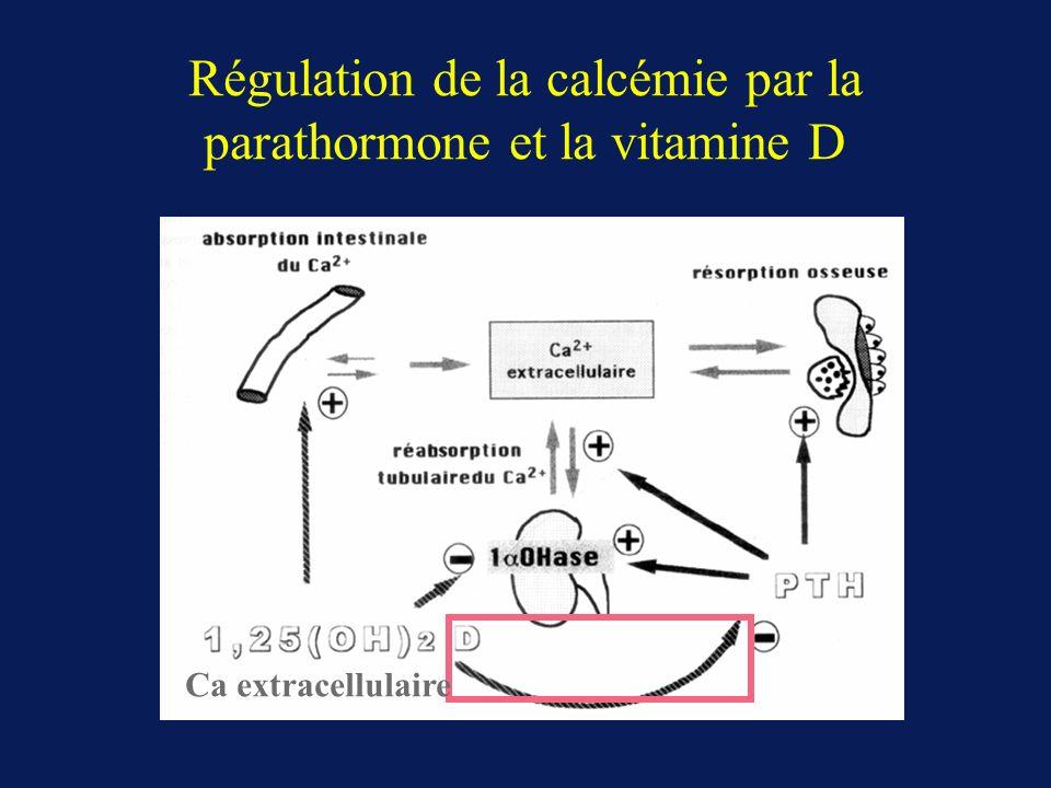 Régulation de la calcémie par la parathormone et la vitamine D Ca extracellulaire