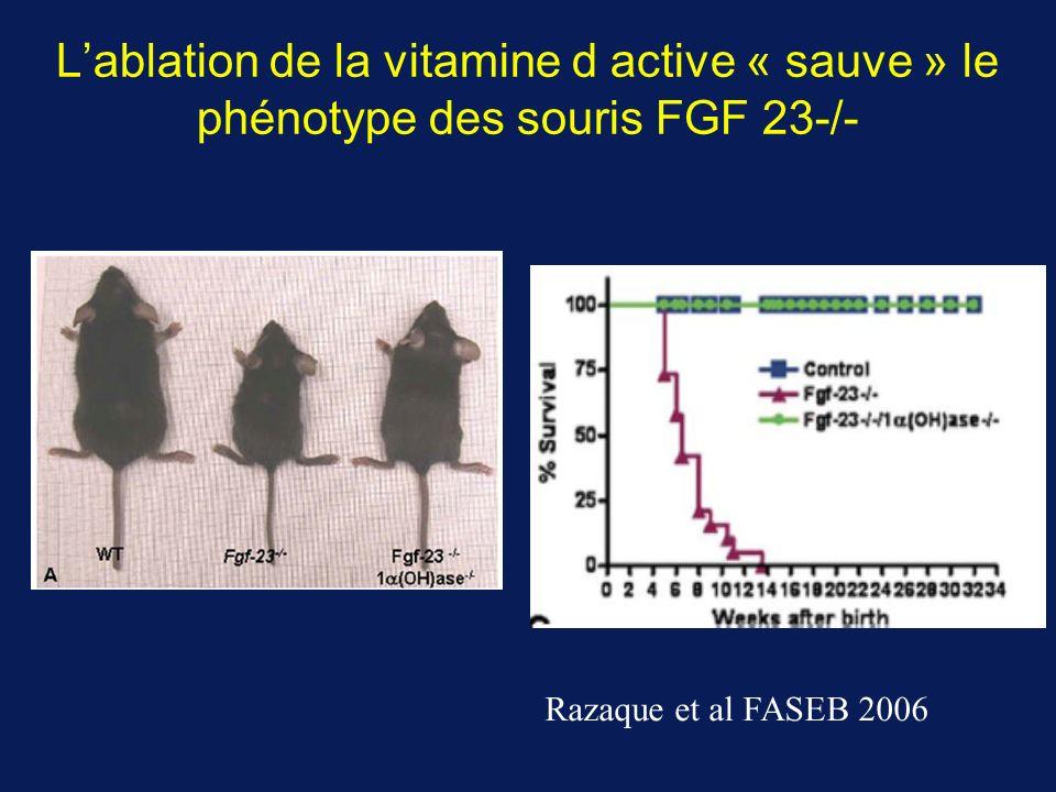 Lablation de la vitamine d active « sauve » le phénotype des souris FGF 23-/- Razaque et al FASEB 2006