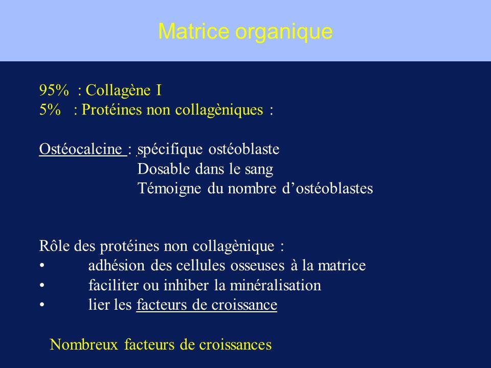 Matrice organique 95% : Collagène I 5% : Protéines non collagèniques : Ostéocalcine : spécifique ostéoblaste Dosable dans le sang Témoigne du nombre d