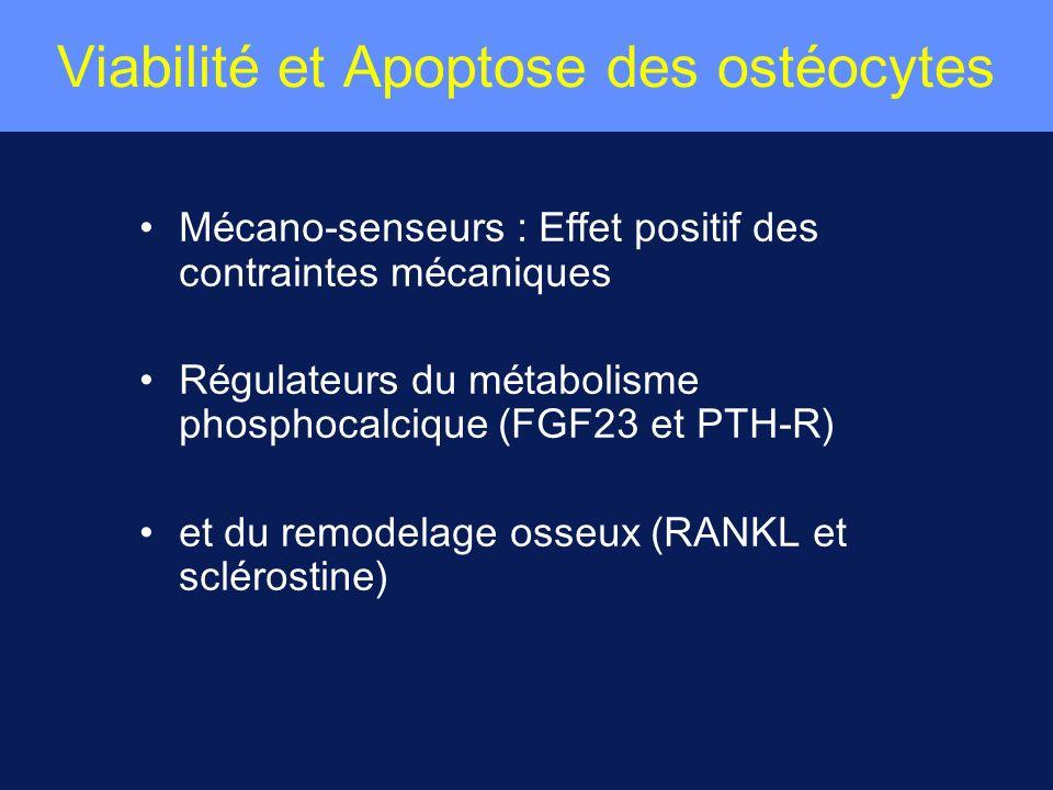 Viabilité et Apoptose des ostéocytes M é cano-senseurs : Effet positif des contraintes m é caniques R é gulateurs du m é tabolisme phosphocalcique (FG