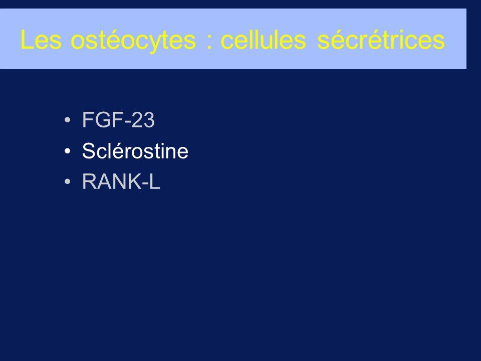 Les ostéocytes : cellules sécrétrices FGF-23 Sclérostine RANK-L