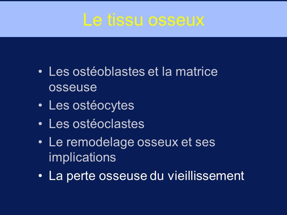 Le tissu osseux Les ostéoblastes et la matrice osseuse Les ostéocytes Les ostéoclastes Le remodelage osseux et ses implications La perte osseuse du vi