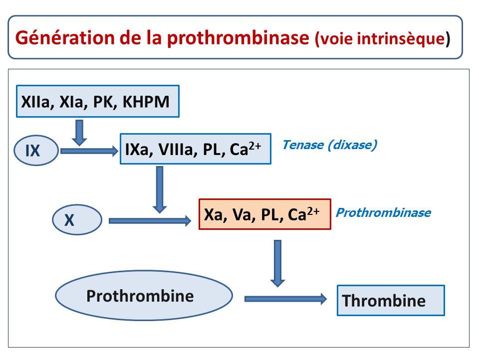 Tenase (dixase) Prothrombinase Génération de la prothrombinase (voie intrinsèque) XIIa, XIa, PK, KHPM IXa, VIIIa, PL, Ca 2+ Xa, Va, PL, Ca 2+ Thrombin