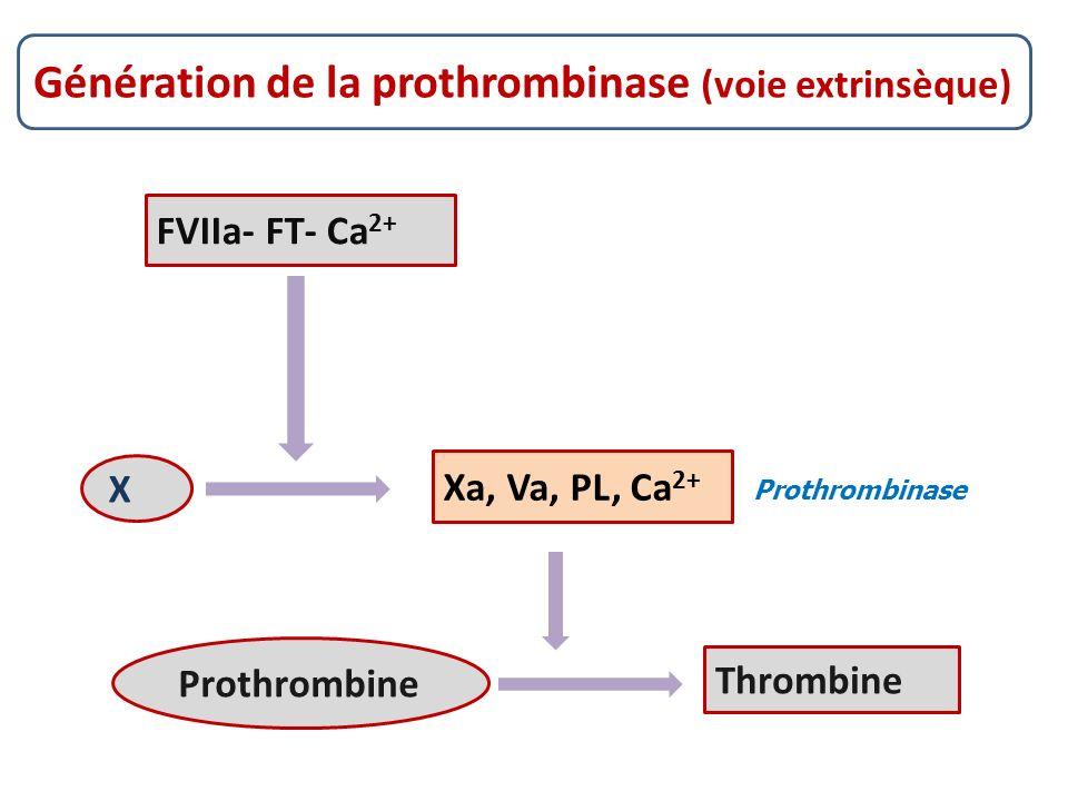 Prothrombinase Génération de la prothrombinase (voie extrinsèque) FVIIa- FT- Ca 2+ Xa, Va, PL, Ca 2+ Thrombine X Prothrombine