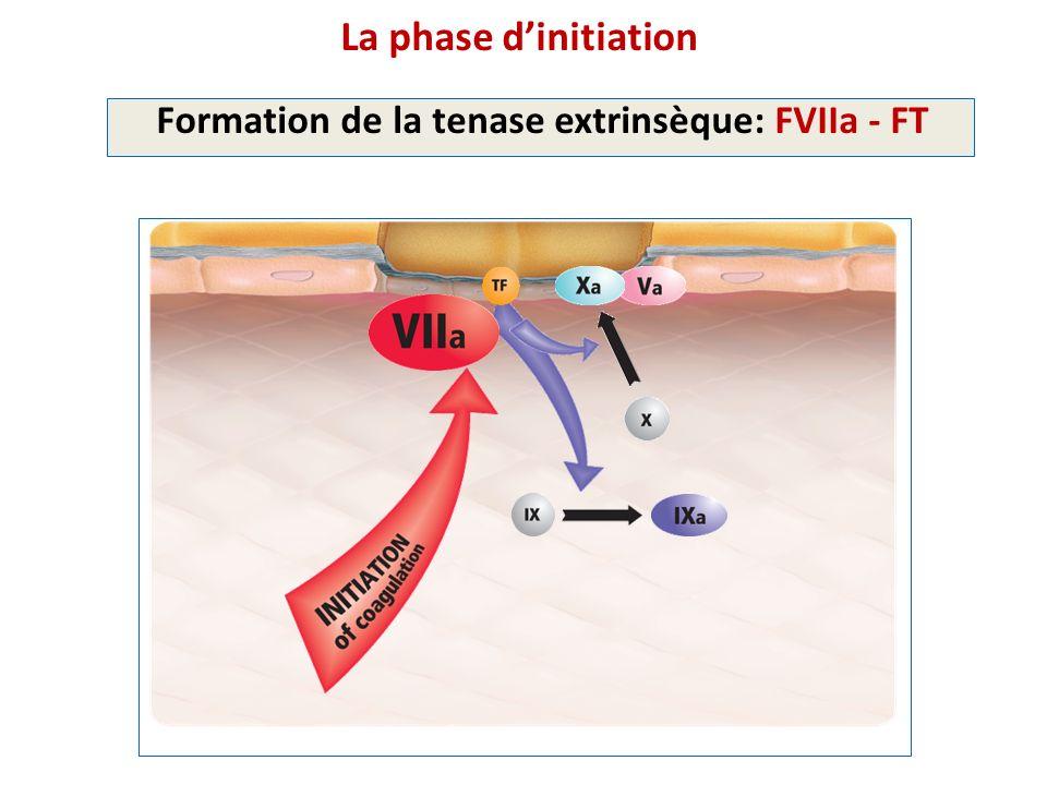 La phase dinitiation Formation de la tenase extrinsèque: FVIIa - FT