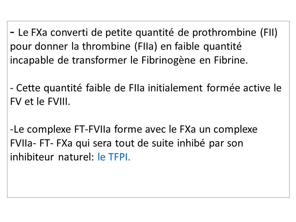 - Le FXa converti de petite quantité de prothrombine (FII) pour donner la thrombine (FIIa) en faible quantité incapable de transformer le Fibrinogène en Fibrine.