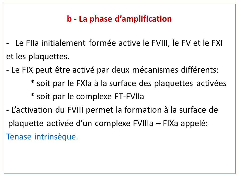 b - La phase damplification -Le FIIa initialement formée active le FVIII, le FV et le FXI et les plaquettes. - Le FIX peut être activé par deux mécani