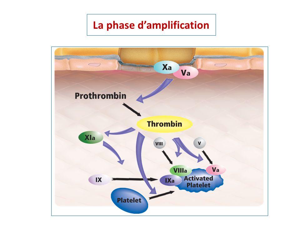 La phase damplification