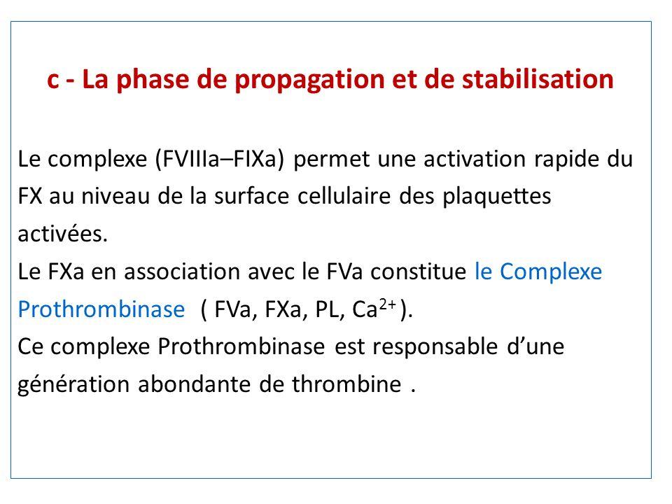 c - La phase de propagation et de stabilisation Le complexe (FVIIIa–FIXa) permet une activation rapide du FX au niveau de la surface cellulaire des plaquettes activées.