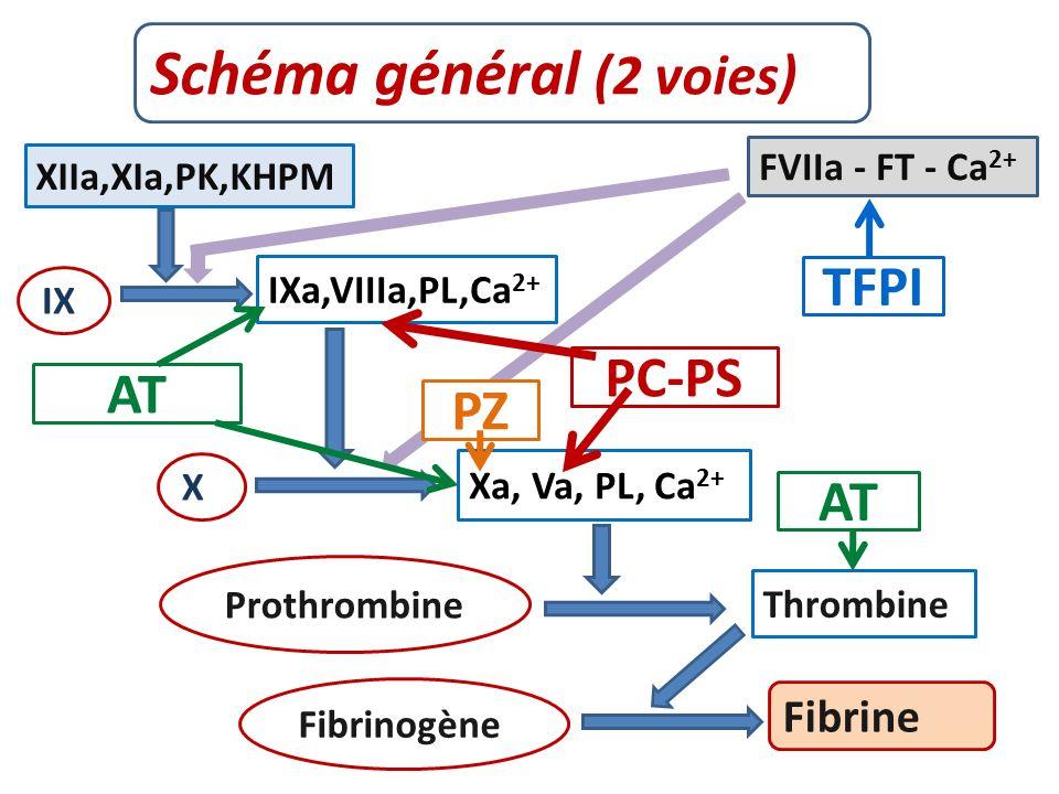 Schéma général (2 voies) Fibrine XIIa,XIa,PK,KHPM FVIIa - FT - Ca 2+ IXa,VIIIa,PL,Ca 2+ Xa, Va, PL, Ca 2+ Thrombine Prothrombine Fibrinogène X IX AT PC-PS TFPI PZ AT