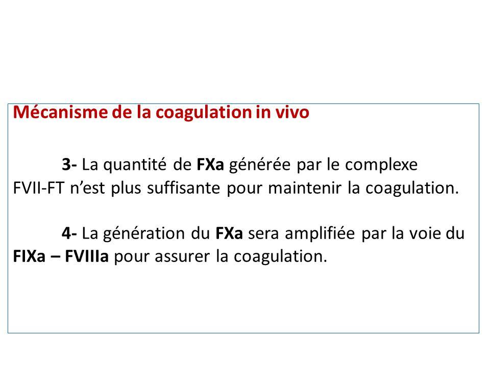 Mécanisme de la coagulation in vivo 3- La quantité de FXa générée par le complexe FVII-FT nest plus suffisante pour maintenir la coagulation. 4- La gé